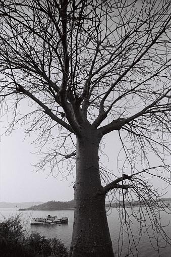 モノクロ「湖のフェリーとバオバブの木」:スマホ壁紙(5)
