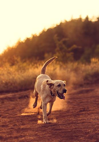 かわいい「骨を探している美しい犬」:スマホ壁紙(13)