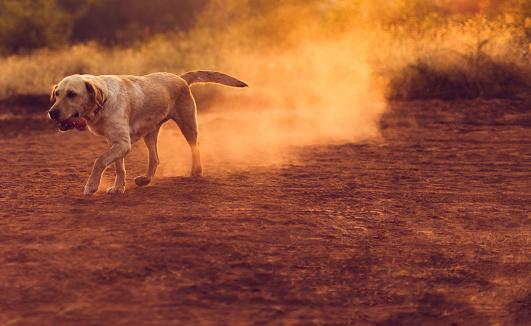 かわいい「骨を探している美しい犬」:スマホ壁紙(14)