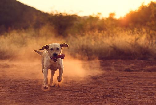 かわいい「骨を探している美しい犬」:スマホ壁紙(12)