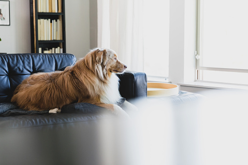 Real Life「Beautiful dog waits patiently for his owner」:スマホ壁紙(1)