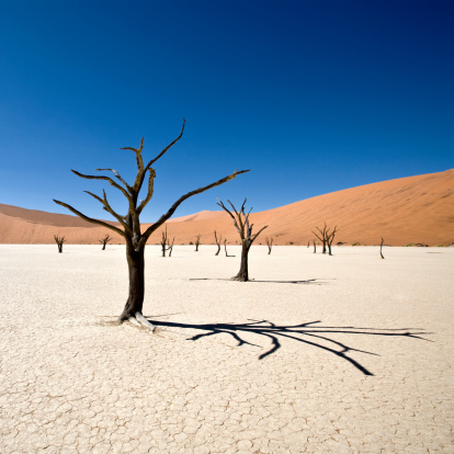 Namib-Naukluft National Park「Beautiful Desert Dead Vlei」:スマホ壁紙(3)