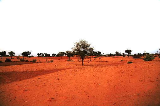 Rajasthan「Beautiful desert landscape」:スマホ壁紙(10)