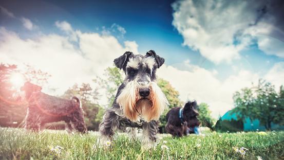 朗らか「美しい犬私たち最高の友達」:スマホ壁紙(6)