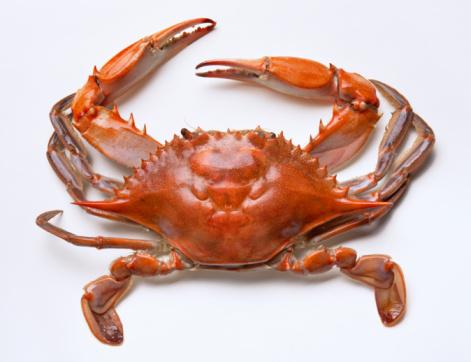 1990-1999「Chesapeake Bay Blue Crab」:スマホ壁紙(0)