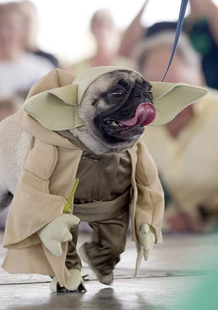 "Dogs Dress Up At Annual ""Pug Parade"":ニュース(壁紙.com)"