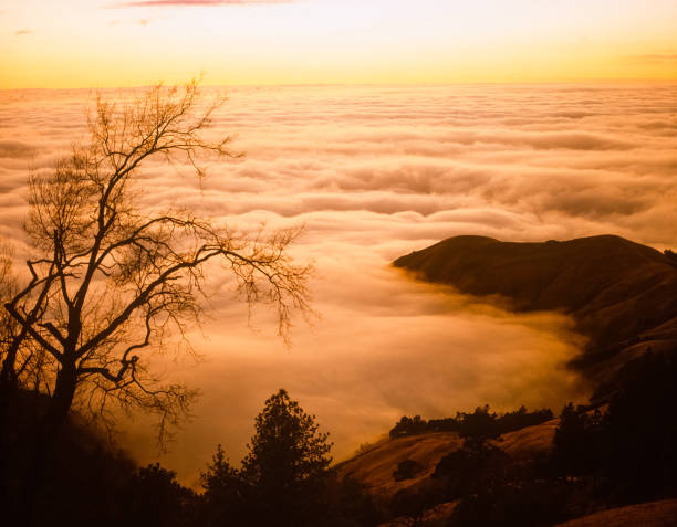 Big Sur's fog covers the surface of the Pacific Ocean at sunset:スマホ壁紙(壁紙.com)
