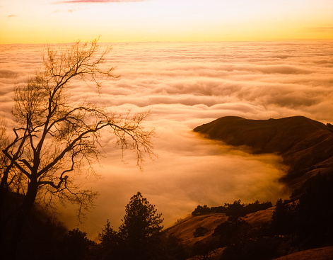 Big Sur「Big Sur's fog covers the surface of the Pacific Ocean at sunset」:スマホ壁紙(17)