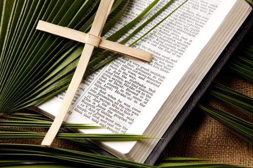 Branch - Plant Part「Palm Sunday Bible Passage and Symbols」:スマホ壁紙(7)