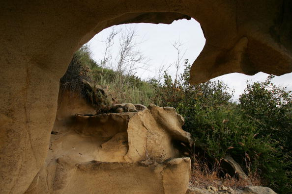 Wilderness Area「Park In Irvine Deemed California's First Natural Landmark」:写真・画像(18)[壁紙.com]