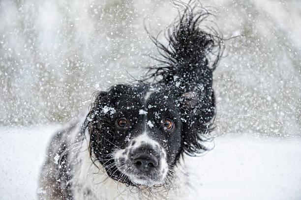 Abominable Snowdog:スマホ壁紙(壁紙.com)