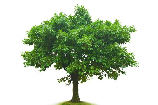 落葉樹「のツリー」:スマホ壁紙(1)