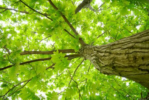 Durability「Tree」:スマホ壁紙(4)