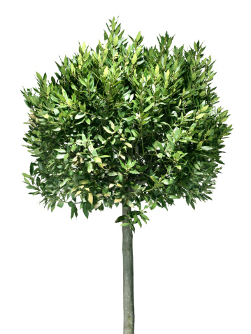 Single Tree「Tree (Click for more)」:スマホ壁紙(0)