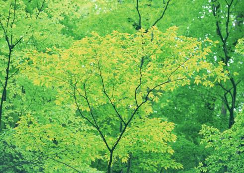 Nikko City「Tree」:スマホ壁紙(14)