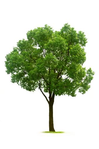 Deciduous tree「Tree」:スマホ壁紙(12)