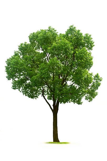 Tree:スマホ壁紙(壁紙.com)
