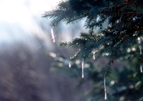 氷柱「Tree」:スマホ壁紙(16)