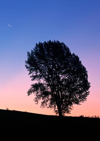 月「Tree」:スマホ壁紙(2)