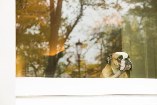 秋「犬のウィンドウ」:スマホ壁紙(16)