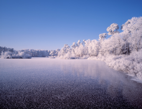 North Brabant「Winter image of forest with lake and trees completely covered in hoarfrost」:スマホ壁紙(0)