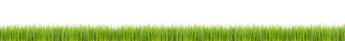 Wheatgrass「Grass Panorama (XXL)」:スマホ壁紙(5)