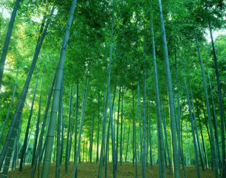 Copse「Bamboo Copse, Kyoto, Japan」:スマホ壁紙(9)