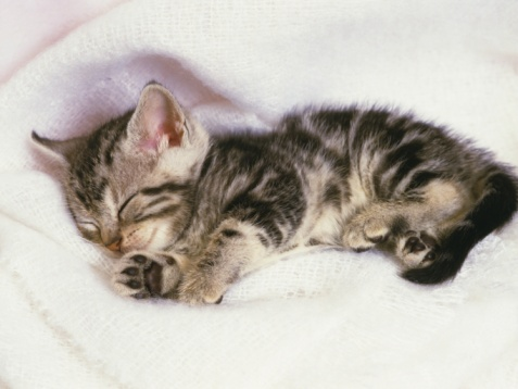 Kitten「Closed Up Image of an American Shorthair Cat Sleeping on a White Towel, High Angle View」:スマホ壁紙(10)