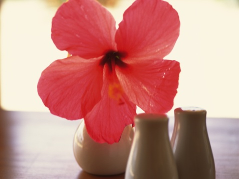 flower「Closed Up Image of a Hibiscus Flower in a Vase, Front View, Differential Focus」:スマホ壁紙(13)