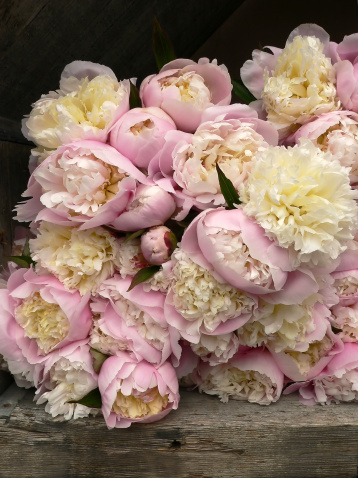 Flower Shop「Lots of pink Peonies for sale in Florist's Shop」:スマホ壁紙(13)
