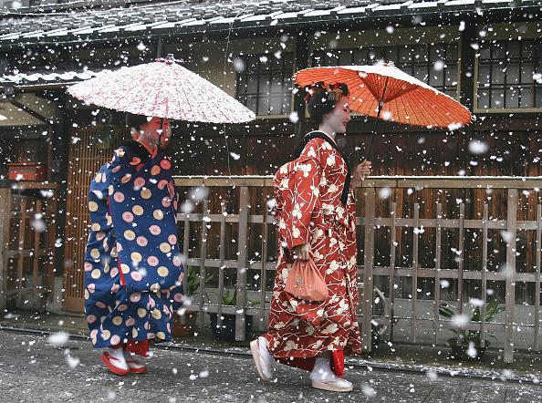 芸者「Maiko and Geisha Attend New Year's Ceremony」:写真・画像(17)[壁紙.com]
