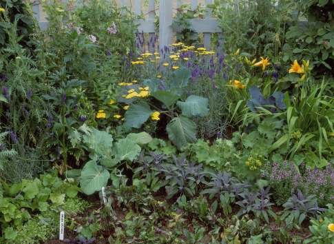 2002「potager garden planted with spinach, sage, thyme, alchemilla, lavandula, achillea, hemerocallis & brassicasdesign: karen maskeu 100 years of peter rabbithcfs 2002」:スマホ壁紙(9)