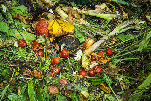 Ecosystem「Compost with rotting grass and vegetables」:スマホ壁紙(9)