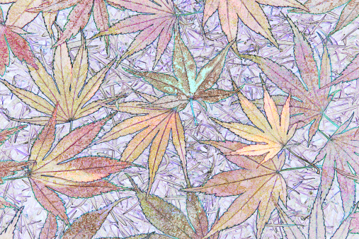 Japanese Maple「Abstract of dainty maple leaves.」:スマホ壁紙(18)