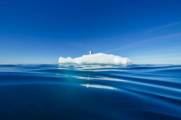 Adelie Penguin on an iceberg in Terra Nova Bay:スマホ壁紙(壁紙.com)
