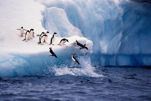 Jumping「Adelie Penguins Jumping from Iceberg」:スマホ壁紙(2)