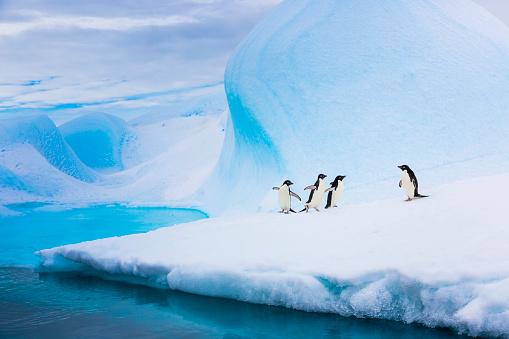 Sub-Antarctic Islands「Adelie penguins on iceberg」:スマホ壁紙(13)