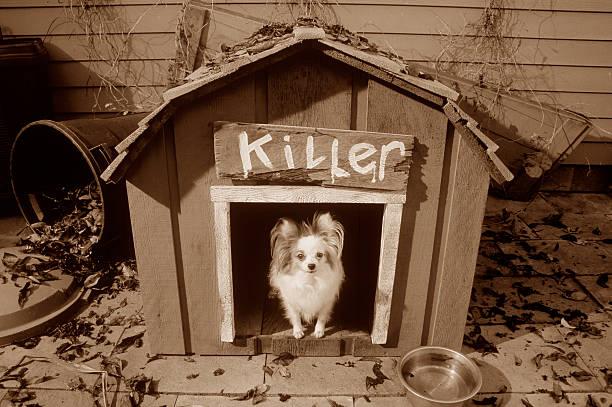 Beware of Small Killer Dog:スマホ壁紙(壁紙.com)