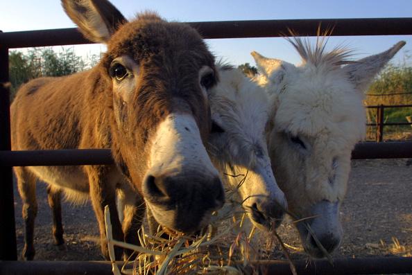 Donkey「Safe Haven for Donkeys in the Holy Land」:写真・画像(1)[壁紙.com]