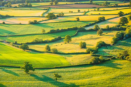 Rolling Landscape「English rolling agricultural landscape」:スマホ壁紙(15)