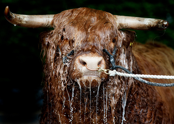 Topix「Preview Day At The Royal Highland Show」:写真・画像(17)[壁紙.com]