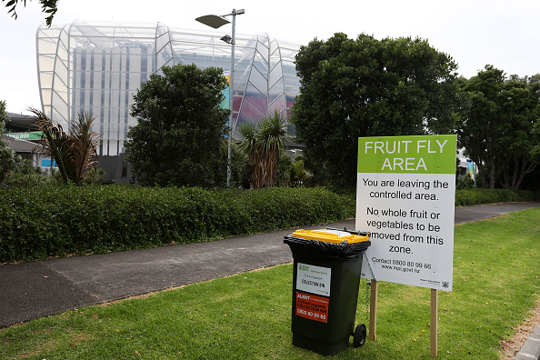 Environmental Issues「Exclusion Zones Set Up In Auckland After Queensland Fruit Flies Are Found」:写真・画像(12)[壁紙.com]