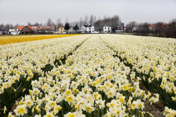 Netherlands「Netherlands」:写真・画像(0)[壁紙.com]