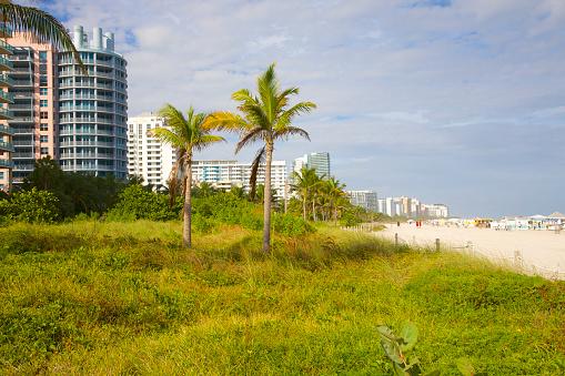 Miami Beach「Sea grapes on dunes at Miami Beach, Florida」:スマホ壁紙(0)