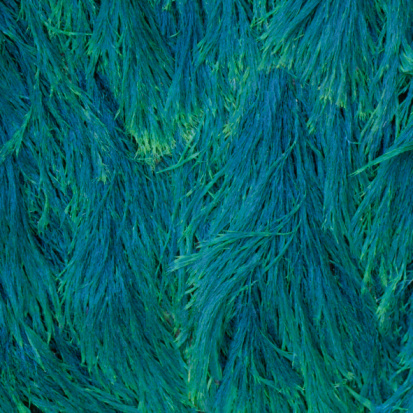 Algae「Blue-green seaweed」:スマホ壁紙(9)