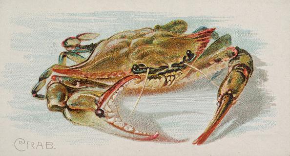 Crustacean「Crab」:写真・画像(14)[壁紙.com]