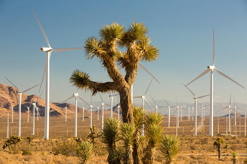 Crane - Construction Machinery「Part of the Tehachapi Pass wind farm, the first large scale wind farm area developed in the US, California, USA and a Joshua Tree.」:スマホ壁紙(1)
