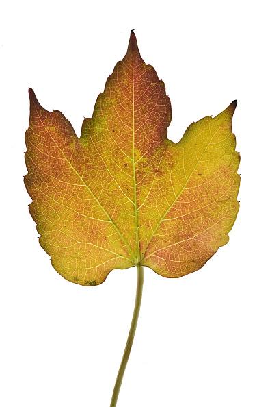葉・植物「Fallen Leaf In Autumn」:写真・画像(12)[壁紙.com]