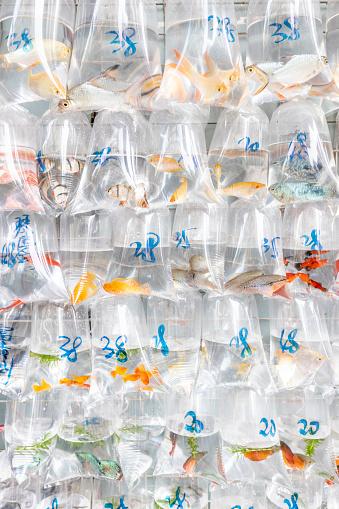Carp「China, Hongkong, Goldfish Market, goldfish in plastic bags for sale」:スマホ壁紙(14)