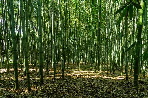 Arashiyama「Japan, Honshu, Kyoto, Arashiyama bamboo forest」:スマホ壁紙(7)
